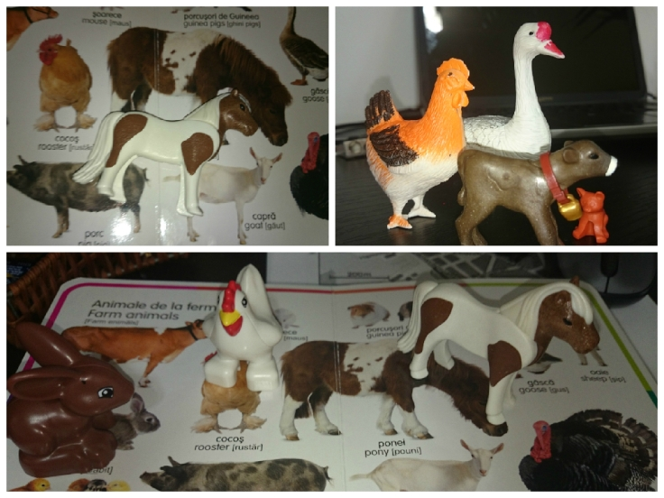 activitate de recunoastere animale