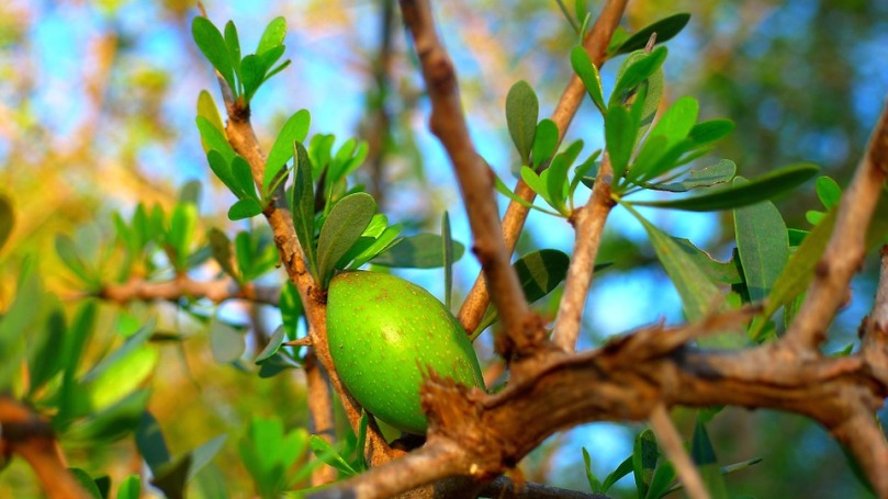 fruct de argan