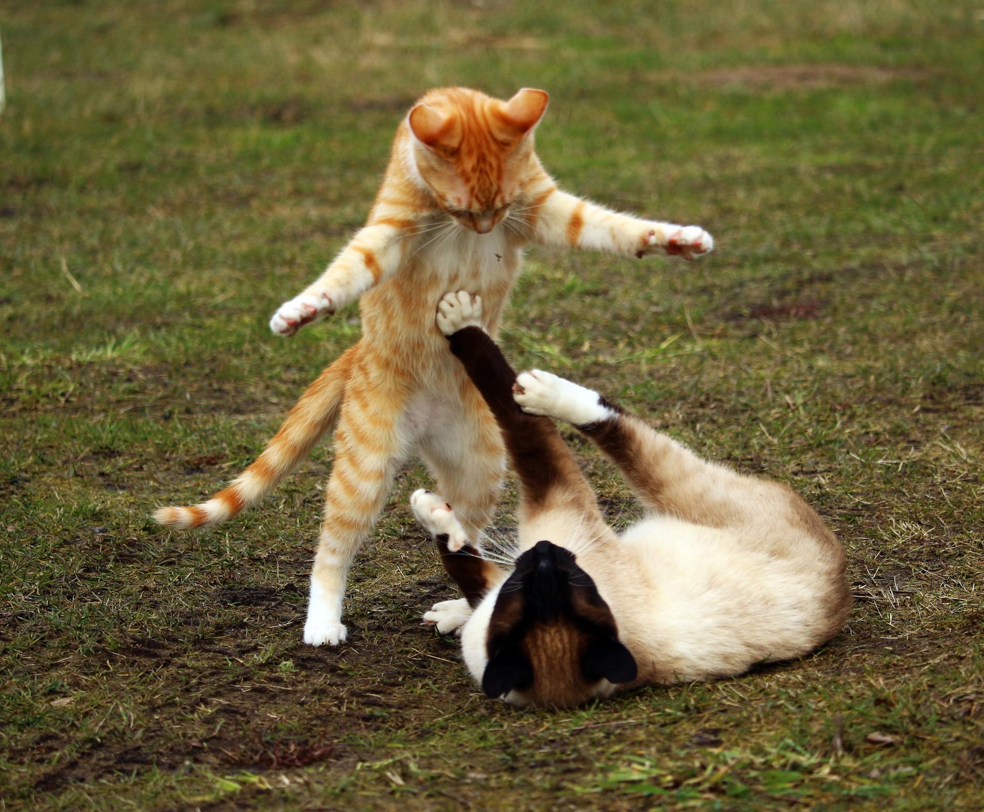 #RecenziileOliviei: Pisicile Războinice